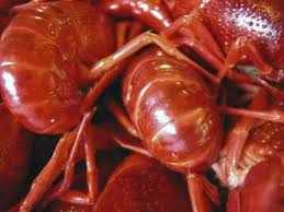 Lobster Barn Abington Ma How To Get Rid Of Crawdads In The Yard Yards And Freshwater Lobster