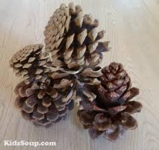 Pinecone Pinecone Activities Kidssoup Resource Library