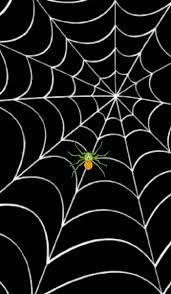 32 best spiders u0026webs images on pinterest halloween