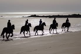 L Ile D Yeu Hotel Horseback Riding Les Violettes Horse Back Riding L Ile D Yeu