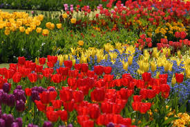 roll out flower garden special pictures of flower bed ideas awesome ideas 5938