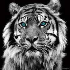 fotobehang witte tijger eyecatcher muur living my interior