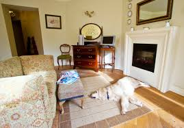 pet friendly hotels in ireland 30 purr fect places to stay