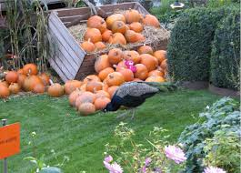 pumpkin time in copenhagen ron phillips travel