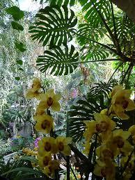 serre jardin d hiver l u0027exposition mille et une orchidées débute aujourd u0027hui au jardin