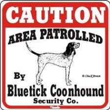 bluetick coonhound genetics redtick coonhound pets pinterest say i love you this