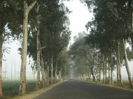 india to plant 2 billion trees along its highways creating