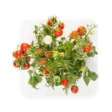amazon com click u0026 grow smart flowerbed mini tomato indoor grow