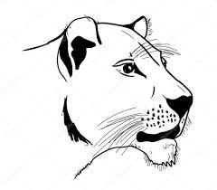 lioness u2014 stock vector ghenadie 1293028