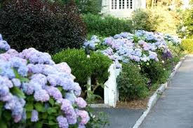 Front Yard Landscaping Ideas Without Grass Small Front Lawn Ideas Front Yard Landscaping Ideas Landscaping