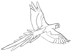 parrots coloring pages free parrot coloring pages embroidery pinterest colour book