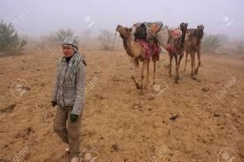thar desert animals tourist walking with camels during early morning fog in thar