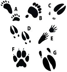 animal track rubber stamps set animal tracks stamps education