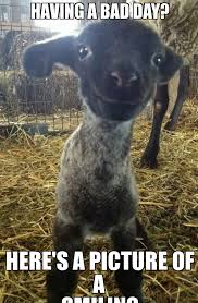 Koala Meme Generator - smiling memes image memes at relatably com