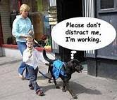 Training A Guide Dog For The Blind 11 Best Guide Dogs Images On Pinterest Guide Dog Service Dogs