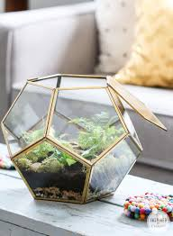 fern terrarium inspired by charm