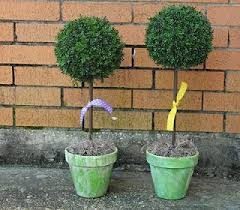 Topiaries Plants - 13 best topiary plants images on pinterest topiaries topiary