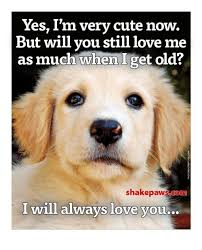 Cute I Love You Meme - 25 best memes about will you still love me will you still