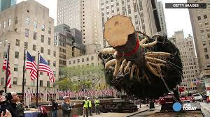 Rockefeller Tree Rockefeller Tree Lighting 5 Things You Need To