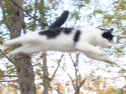 spooky flying space cat i caught spooky flying through th u2026 flickr