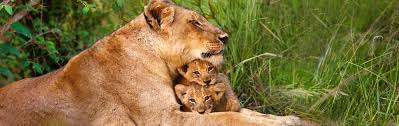 New York wildlife tours images African safari tours best safaris vacations 2018 2019 jpg