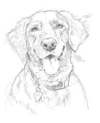 easy pencil drawings of animals the best way to shoot your dog