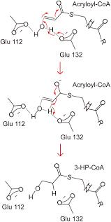 frontiers molecular insight into the acryloyl coa hydration by