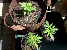 make seedlings grow faster avoid common problems u0026 mistakes