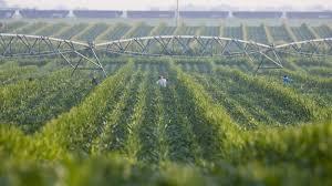 irrigated corn turning off the spigot in western kansas farmland the salt npr