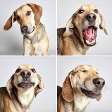 boxer dog utah cute shelter dog photobooth pics help them find forever homes