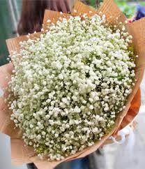 Baby Breath Flowers Baby U0027s Breath Gypsophila Bouquet Chinese Girls Flowers Send