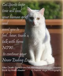 grieving loss of pet cat loss quote greiving cat loss inspirational cat brent