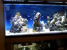 55 gallon aquarium light 55 gallon 24in orphek led lights coral reef tank aquarium youtube