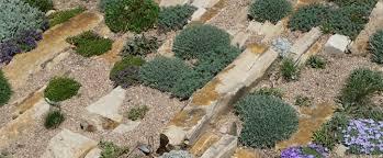 Creating A Rock Garden Creating A Crevice Garden The Newest Technique In Rock Gardening