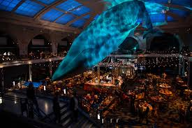 bohemian lounge in hall of ocean life dejuan stroud inc event