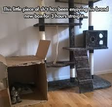 Cardboard Box Meme - why do you even bother