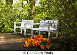 Benches In Park - park with trees and flowers in spring park with beech trees