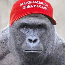 Gorilla Memes - harambe is back in politics