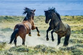Wyoming wild animals images Discover the wildlife of the wild west animalanswers co uk jpg
