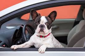 How To Remove Stain From Upholstery How To Remove Pet Stains From Car Upholstery