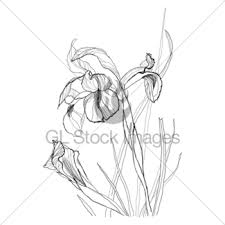 drawing thistle gl stock images