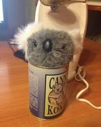 canned koala album on imgur