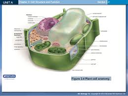 anatomy of plant cell image collections human anatomy learning