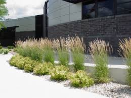 mckay s 5 favorite ornamental grasses