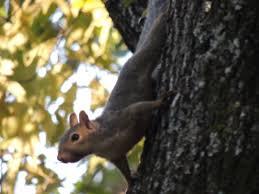 Arkansas wildlife tours images 27 best arkansas wildlife images arkansas wildlife jpg