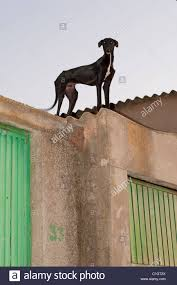 dog on the roof stock photo royalty free image 35405522 alamy