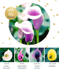 Lilies Flower Calla Lily Meaning And Symbolism Ftd Com