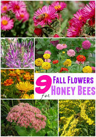 best 25 best flowers for bees ideas on pinterest growing