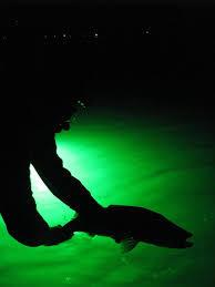 hydro glow fishing lights 7 best night fishing with hydro glow images on pinterest glitter
