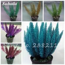 get cheap ornamental grass garden aliexpress alibaba